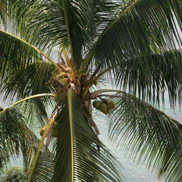 Juli/ Sentosa Island, Singapore: Konzernprüfung
