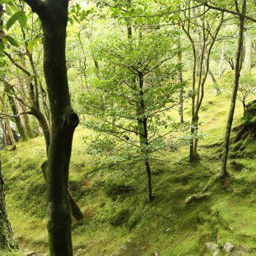 November – Japanische Wälder
